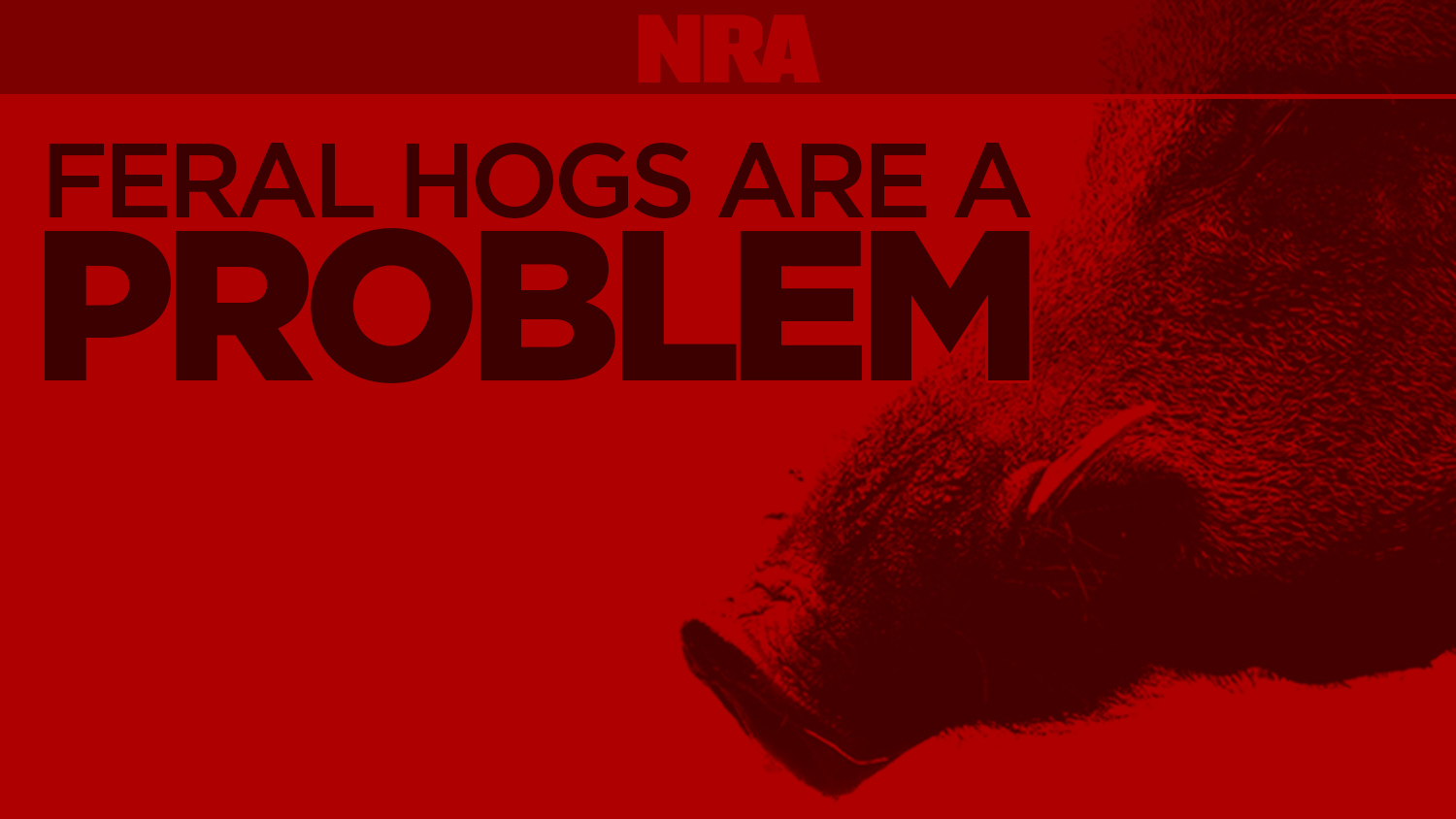 INFOGRAPHIC: Feral hogs are a problem