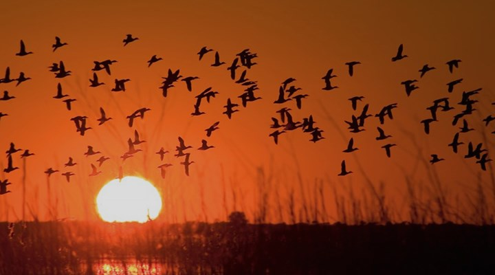 The Sunshine State's New Initiative to Preserve Timeless Hunting Traditions