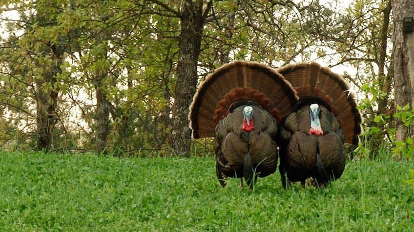 Five Ways To Prepare For Spring Turkey Season