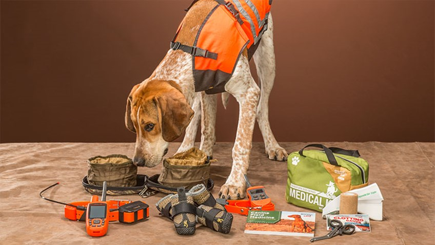 Must-Have Gear for Field Dogs