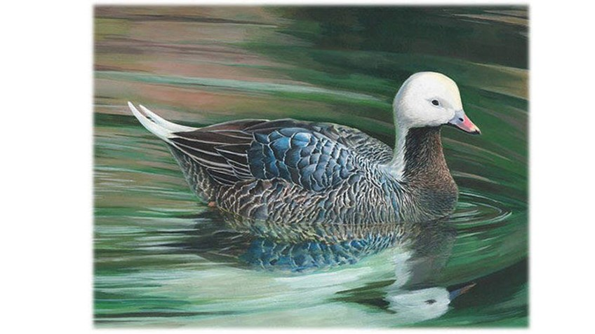 Teen Wins National Junior Duck Stamp Contest