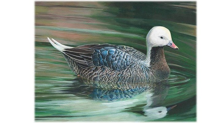 NRA Family: Teen Wins National Junior Duck Stamp Contest