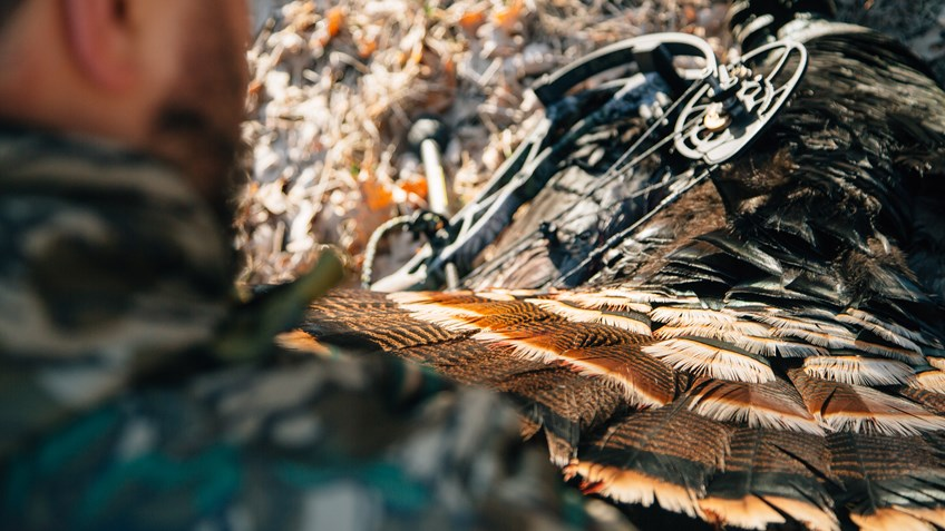 5 Tips for Bowhunting Turkeys Without a Blind
