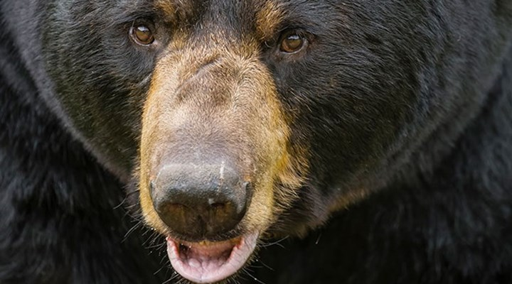 American Hunter: Bear Defense from the Professionals