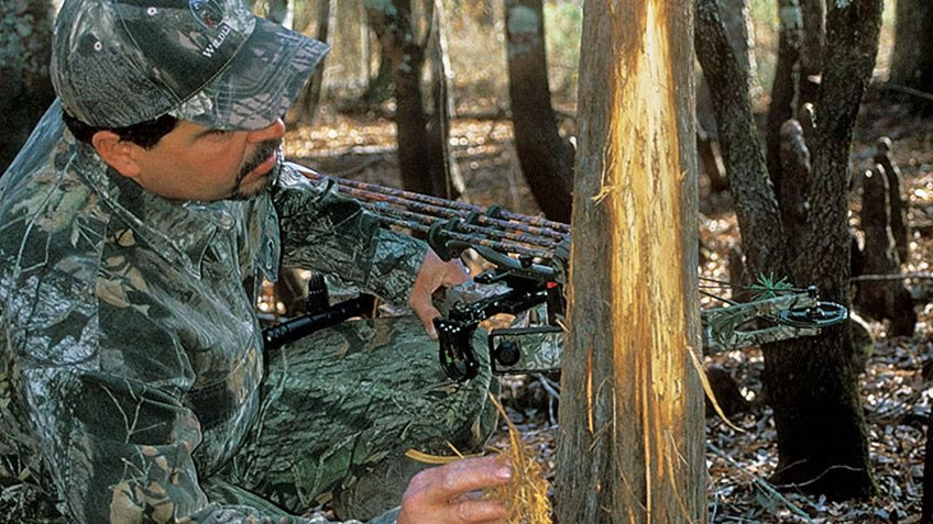 American Hunter: How to Read Rubs