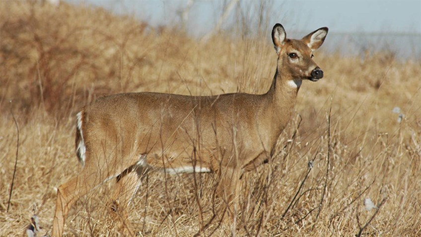 Antlerless Deer Permit Increase Coming to Pennsylvania
