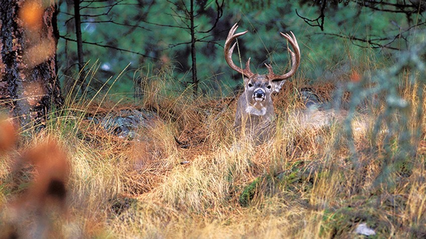 Where Do Big Bucks Hide?
