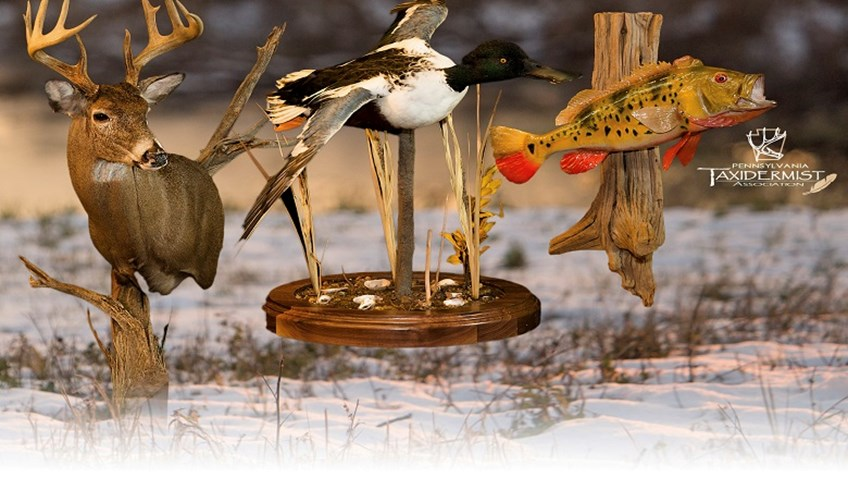 GAOS Draws Increased Number of Entries in Taxidermy Competition